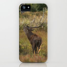 Red deer, rutting season iPhone Case
