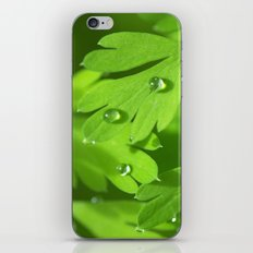 Spring Morning 412 iPhone & iPod Skin
