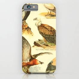 William Playne Pycraft - A Book of Birds (1908) - Plate 9: Vultures iPhone Case