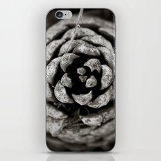 Pine Cone iPhone & iPod Skin