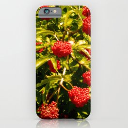 Warm Hued Red Berries in Late Summer iPhone Case