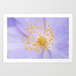Anemone - Purple Flower - Botanical Garden Art Print