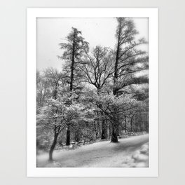 Pines and Snow Art Print