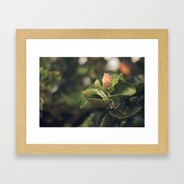 Capullo de Hibisco - Hibiscus bud Framed Art Print