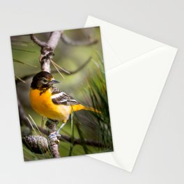 Oriole and Pine cone Stationery Cards