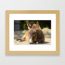 Donkey Foal Framed Art Print