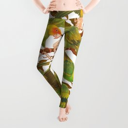 The extinction of the Carolina Parakeet. Leggings
