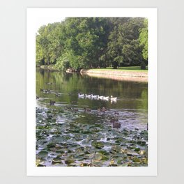 Ducks and Lilypads Art Print