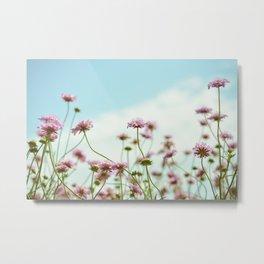 Pincushion Flower Metal Print