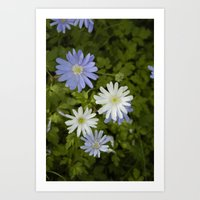 Purple and White Flowers Art Print