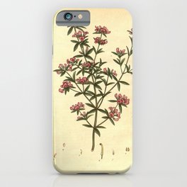 Flower pultenaea rubiaefolia Madder leaved Pultenaea iPhone Case