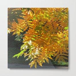 Fallbeauty/Golden Foliage Metal Print
