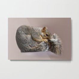 Shy squirrel Metal Print
