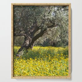 The Old Olive Grove in Ozankoy Serving Tray