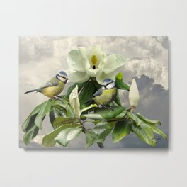 Blue Tits in Magnolia Tree Metal Print