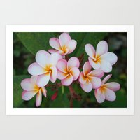 Plumeria Blooms Art Print