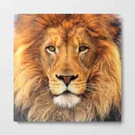 Wild Cat Glare Metal Print