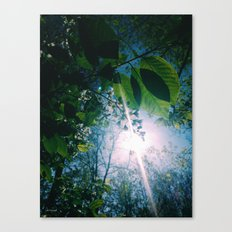 blessed spring morning Canvas Print