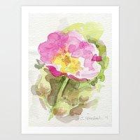 Wild Summer Rose Art Print