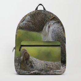 Beautiful Squirrel Backpack