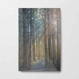 Sunlight in Pine Forest Metal Print