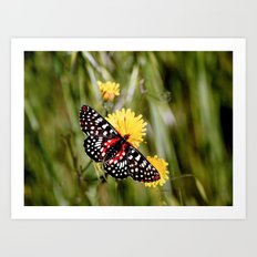 A Red Dotted Checkerspot Art Print