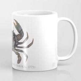 Mud Crab, Scylla serrata (Forskål, 1775) Coffee Mug