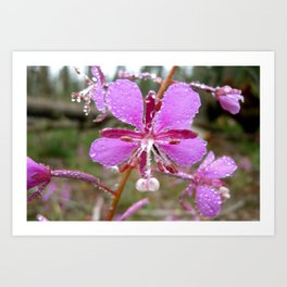 Drenched Pink Flower Art Print