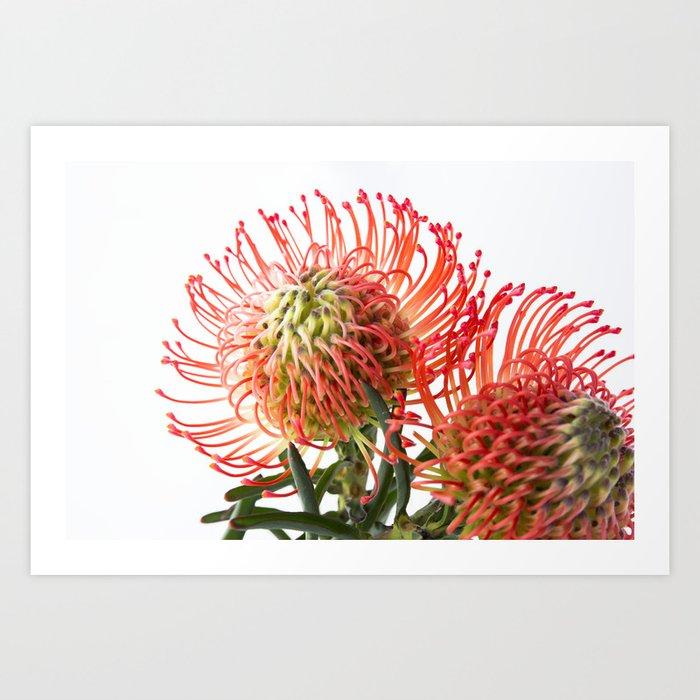 Fynbos Botanical Collection 4 Art Print