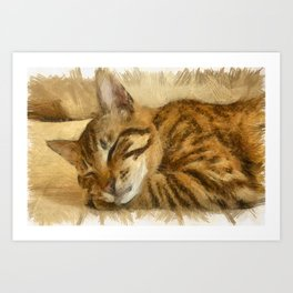Let Sleeping Cats Lie Art Print