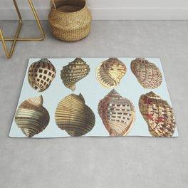 shell sea Rug