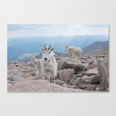 Friends at 14,000 Ft. Canvas Print