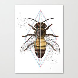 BeeSteam Canvas Print