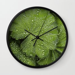 Water drops on fresh green Leaf Wall Clock