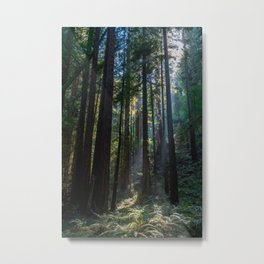 Red Woods & Sun Rays Metal Print