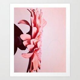 Colour-Pop - Sugar Pop- Series #1 Art Print