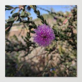 Rancho Palos Verdes Nature Canvas Print