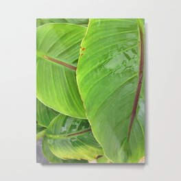 COLOCASIA I Metal Print