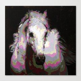 White Arabian Canvas Print