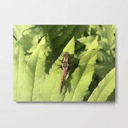 Dragon fly on leafs Metal Print