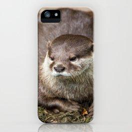 Sunning Otter iPhone Case