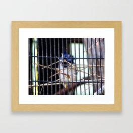 Jailbird  Framed Art Print