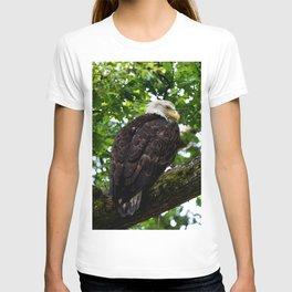 Bald Eagle Perched for Prey T-shirt