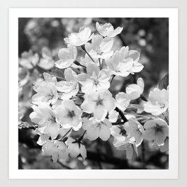 Sakura Prunus serrulata Art Print