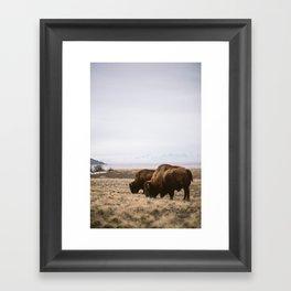 Bison Ridicule Framed Art Print