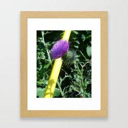 Natures compliment Framed Art Print