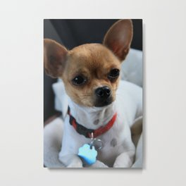 Munchkin The Princess Metal Print