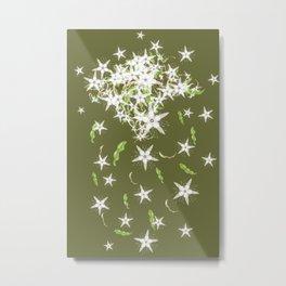 Flowers and Leaves of the Australian Aniseed Myrtle Tree - Syzygium anisatum Metal Print