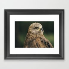 Power Bird II Framed Art Print