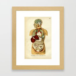 Internal organs of the Human Body Framed Art Print
